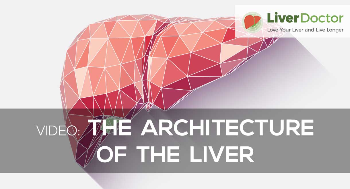 The Architecture Of The Liver