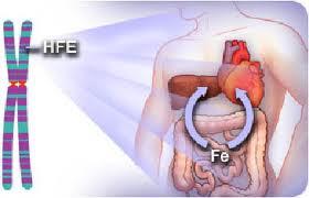 Liver-Doctor-Hemochromatosis