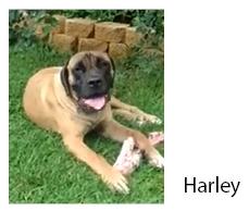 harley 2013