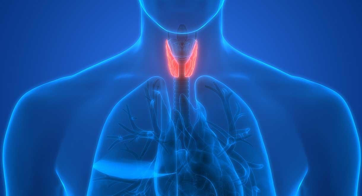 Overactive Thyroid Gland