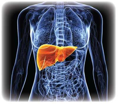 Liver-Doctor-NAC