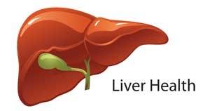 Liver-Doctor-Liver-Health