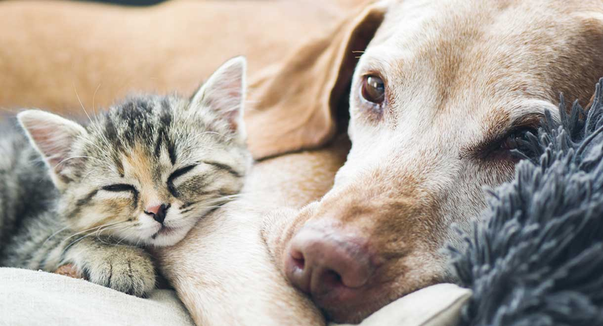 Liver Problems In Dogs, Cats And Horses | Liver Doctor