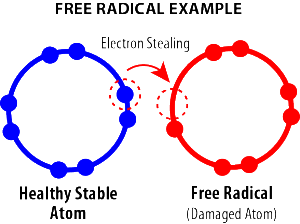 Liver-Doctor-Free-Radical-Example
