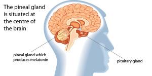 Liver-Doctor-Sleep-Melatonin-And-Cancer