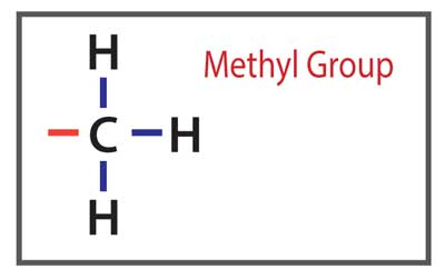 Liver-Doctor-Methyl-Group