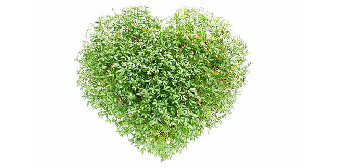 watercress-heart-w