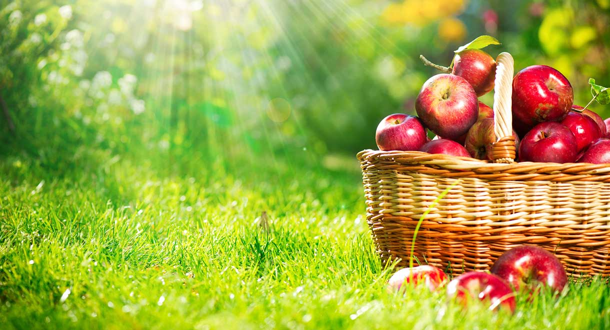 Apples Can Heal Your Gut