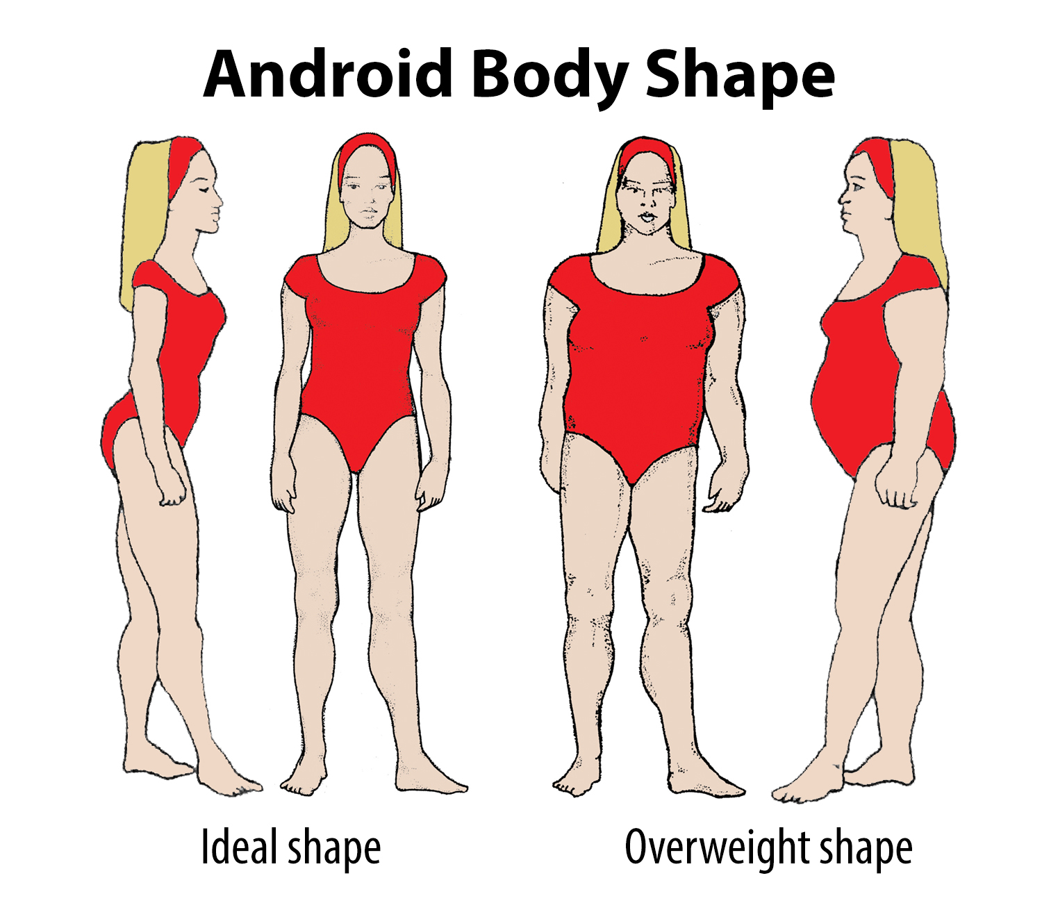 Your Body Type Is Android Liver Doctor